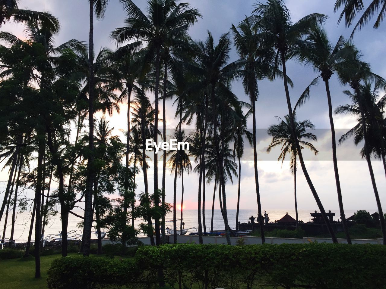 SILHOUETTE PALM TREES BY SEA AGAINST SKY