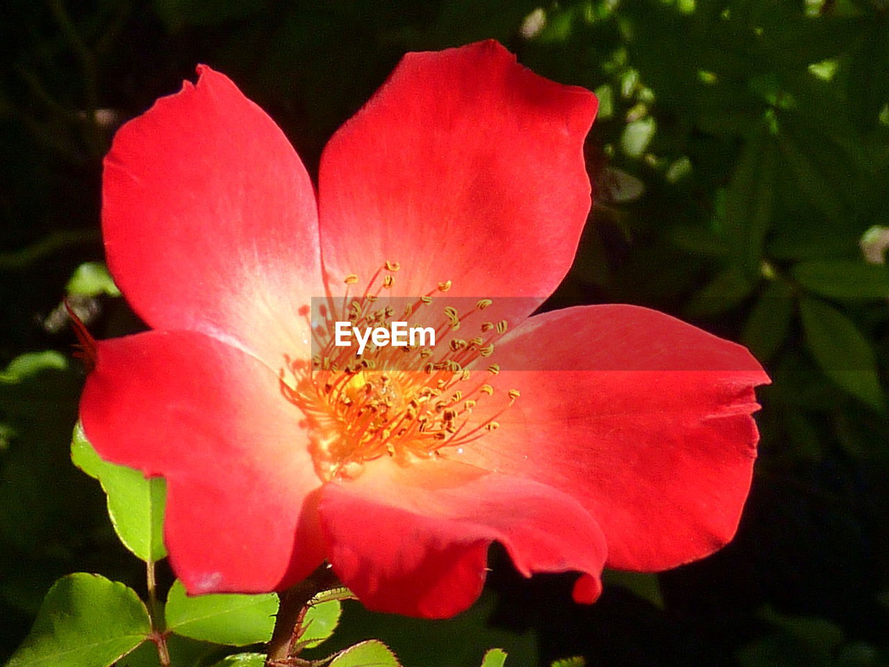 flower, petal, beauty in nature, nature, flower head, growth, plant, no people, fragility, freshness, outdoors, close-up, day