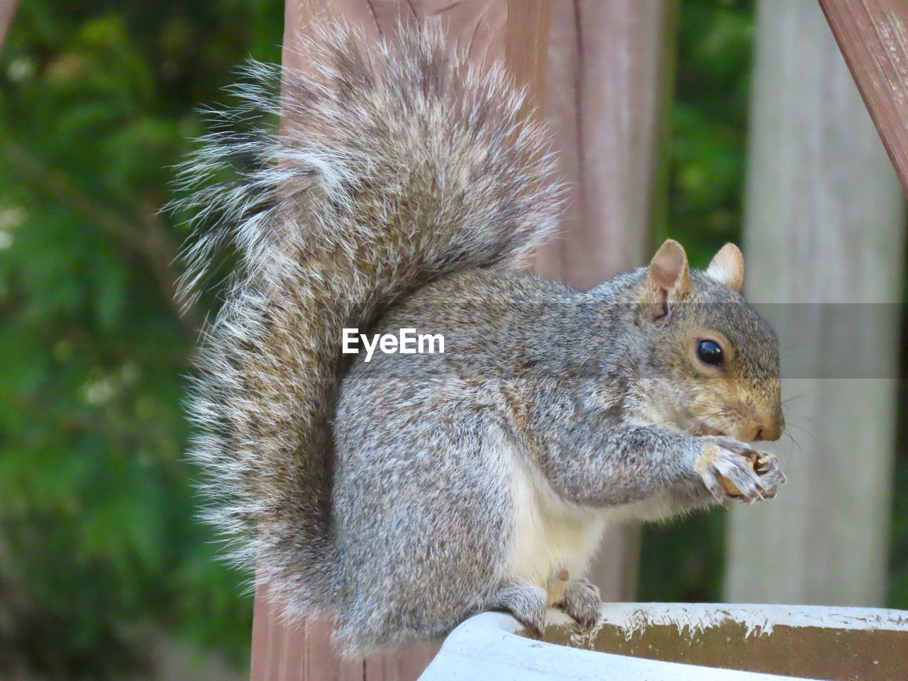 animal wildlife, mammal, animals in the wild, one animal, focus on foreground, rodent, squirrel, close-up, vertebrate, day, no people, side view, holding, outdoors, nature, eating, tree, profile view, whisker