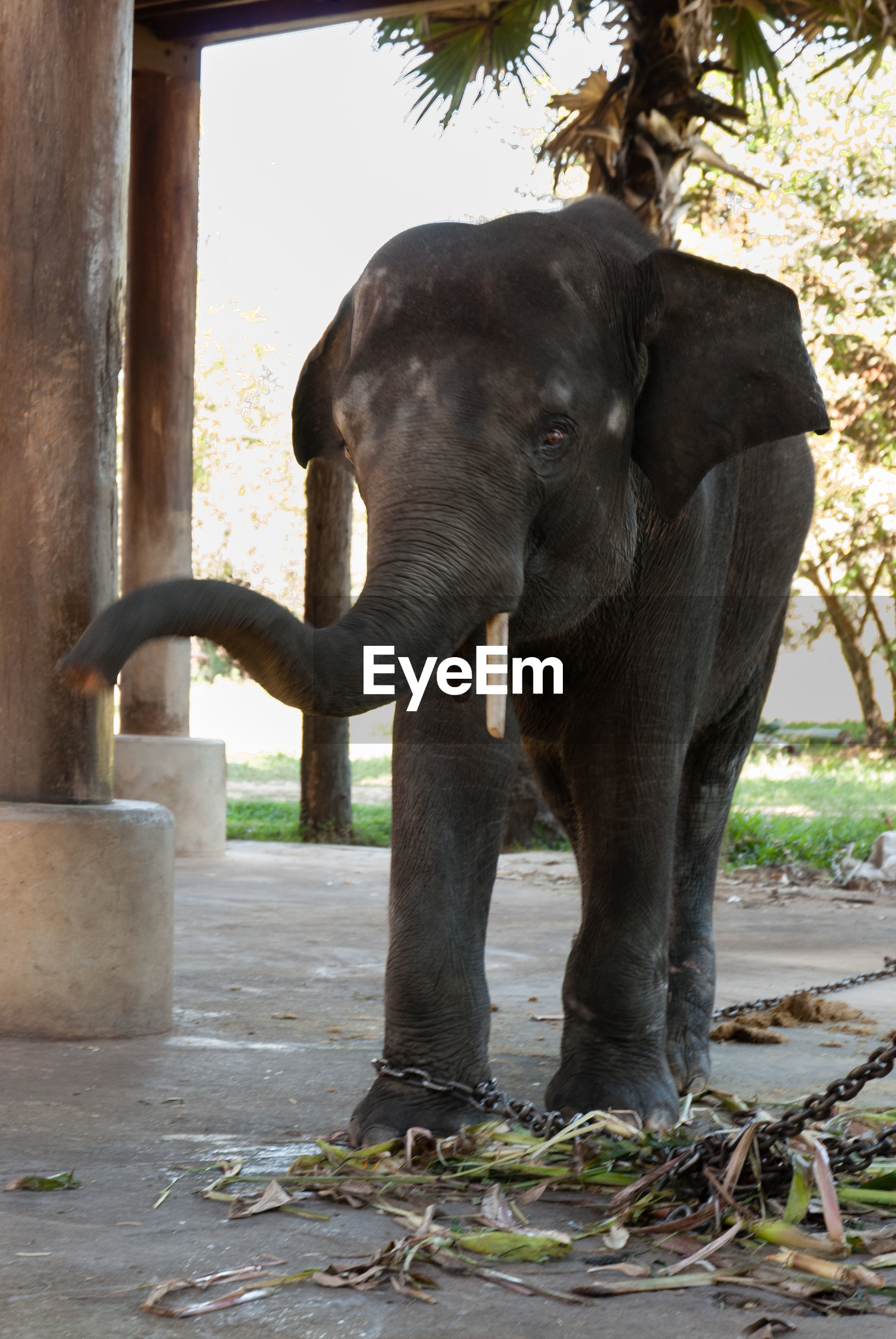 Elephant standing at zoo