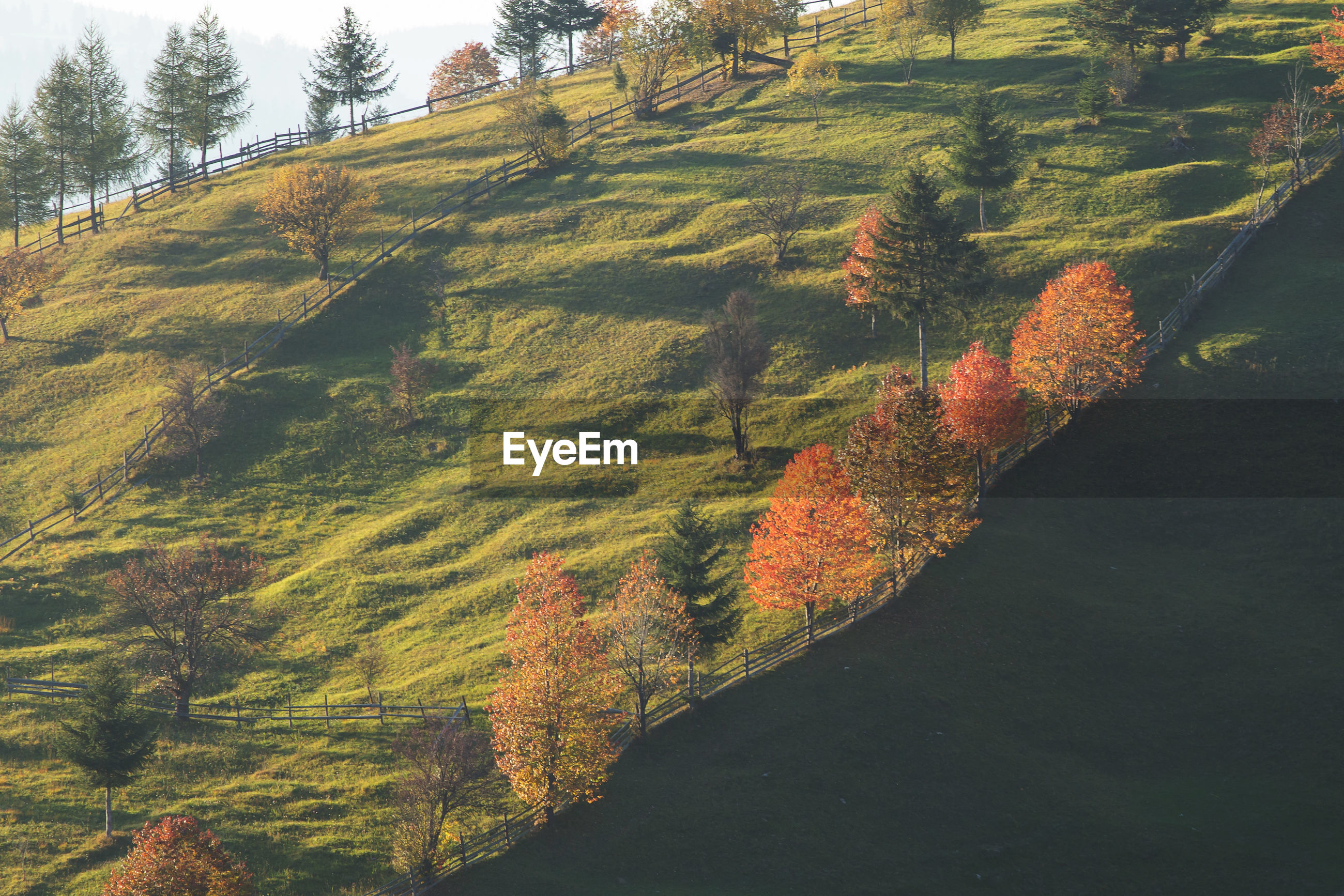 Scenic view of trees on landscape during autumn