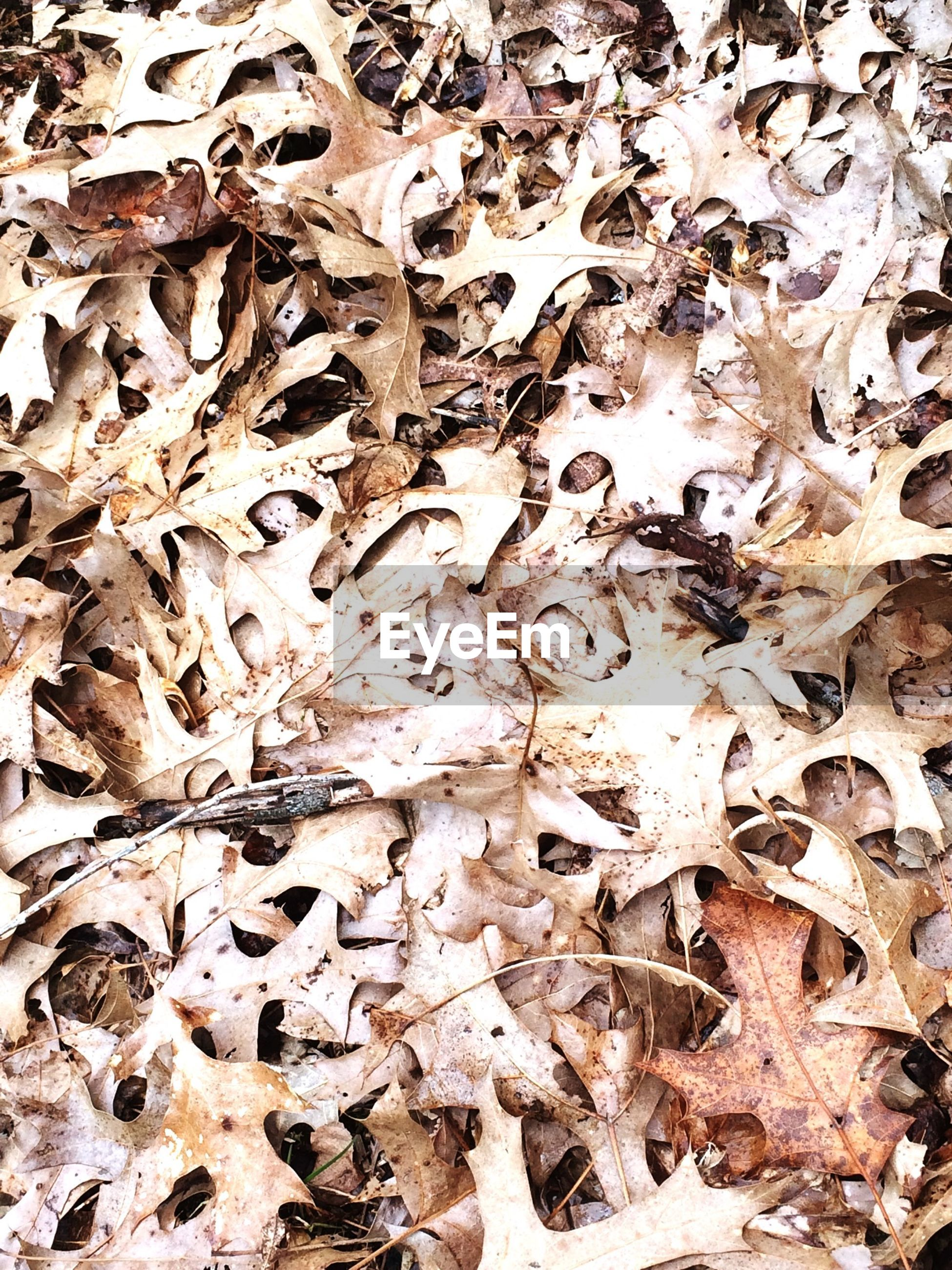 abundance, high angle view, full frame, leaf, dry, backgrounds, autumn, leaves, day, messy, nature, large group of objects, outdoors, fallen, season, change, field, no people, ground, dirt