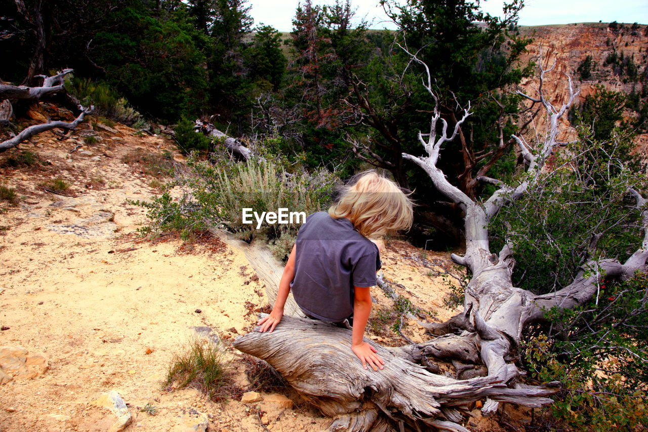 Rear view of boy on driftwood at dinosaur national monument