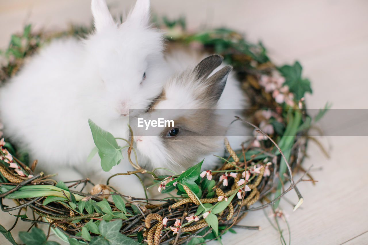 Close-Up Of Rabbits Relaxing In Nest