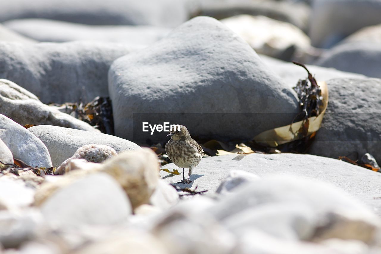 BIRDS PERCHING ON ROCK