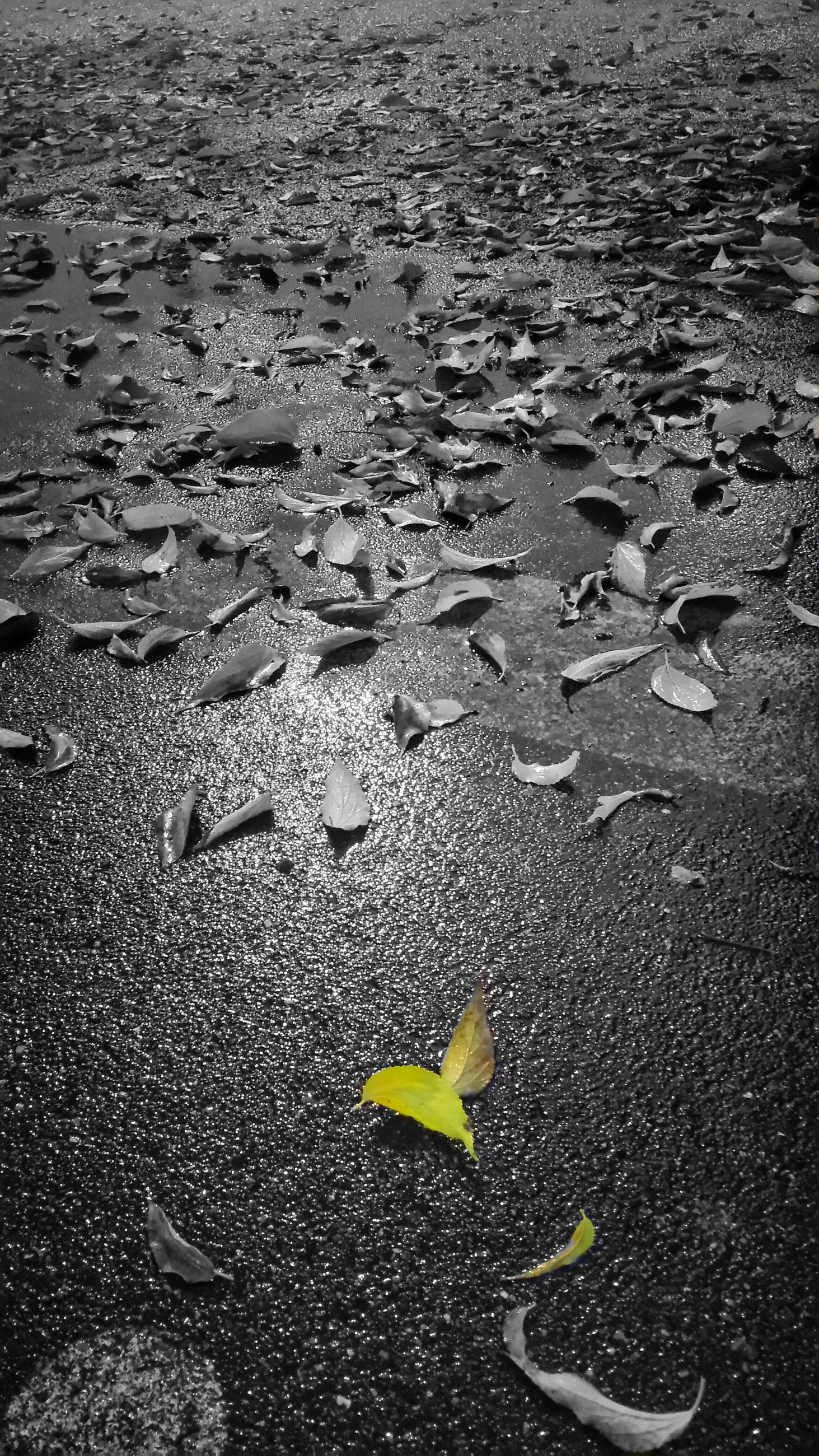 leaf, sand, nature, autumn, no people, outdoors, beach, change, day, yellow, beauty in nature, close-up, fragility, maple
