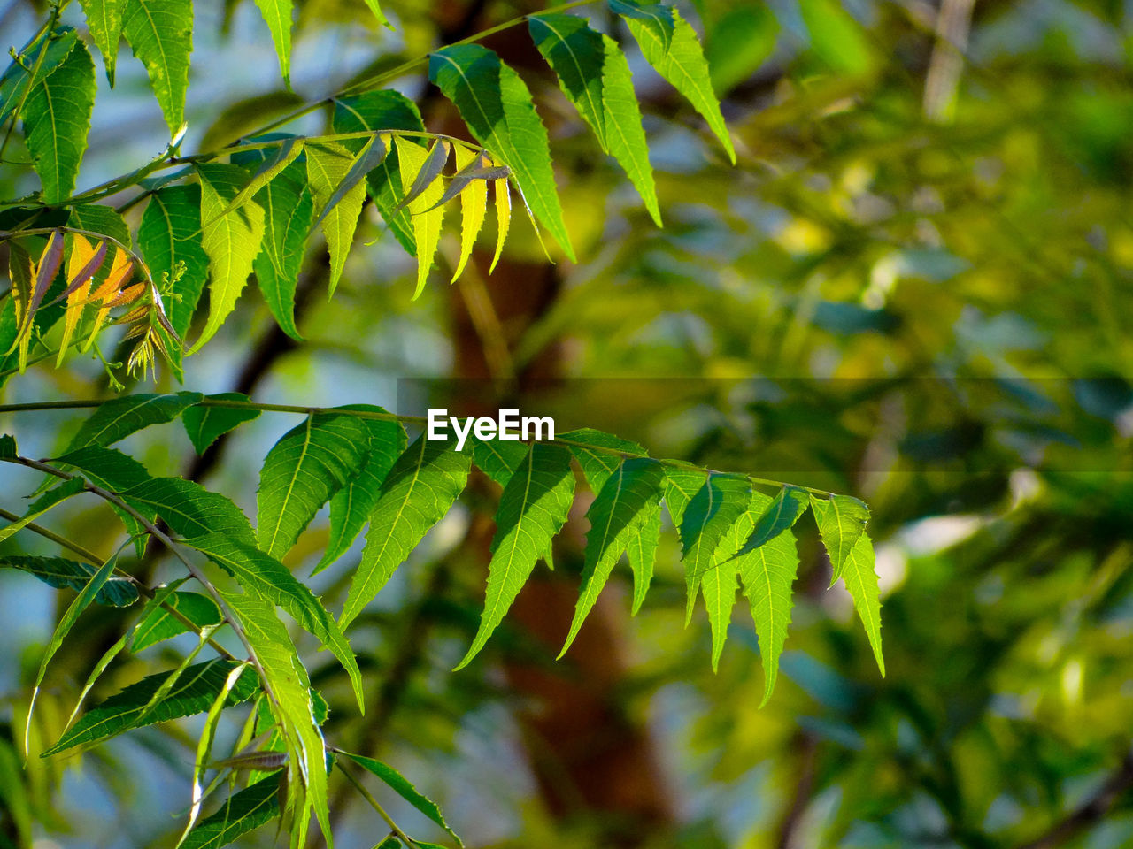 CLOSE-UP OF GREEN LEAVES ON TREE