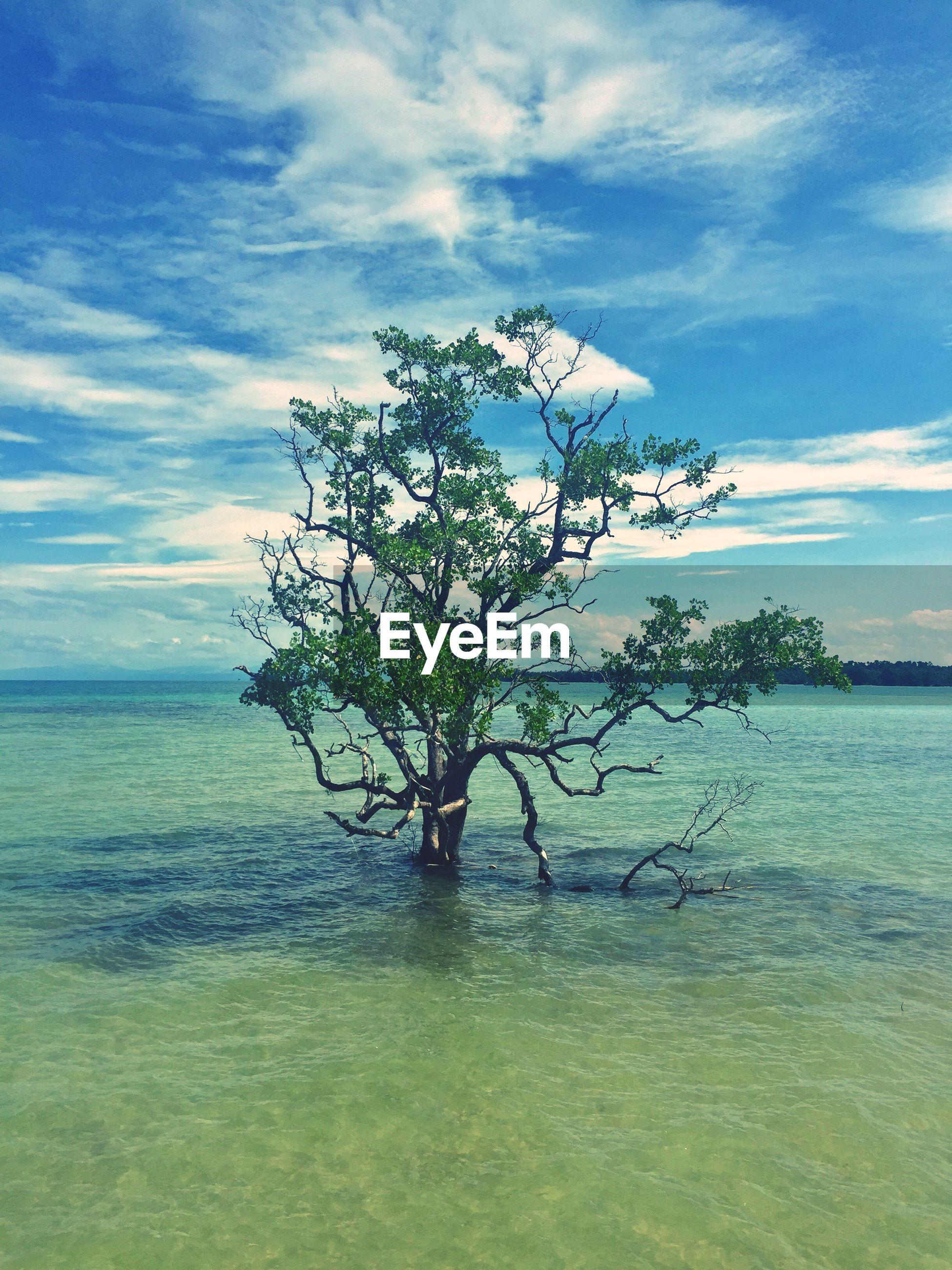 TREE ON SHORE AGAINST SKY