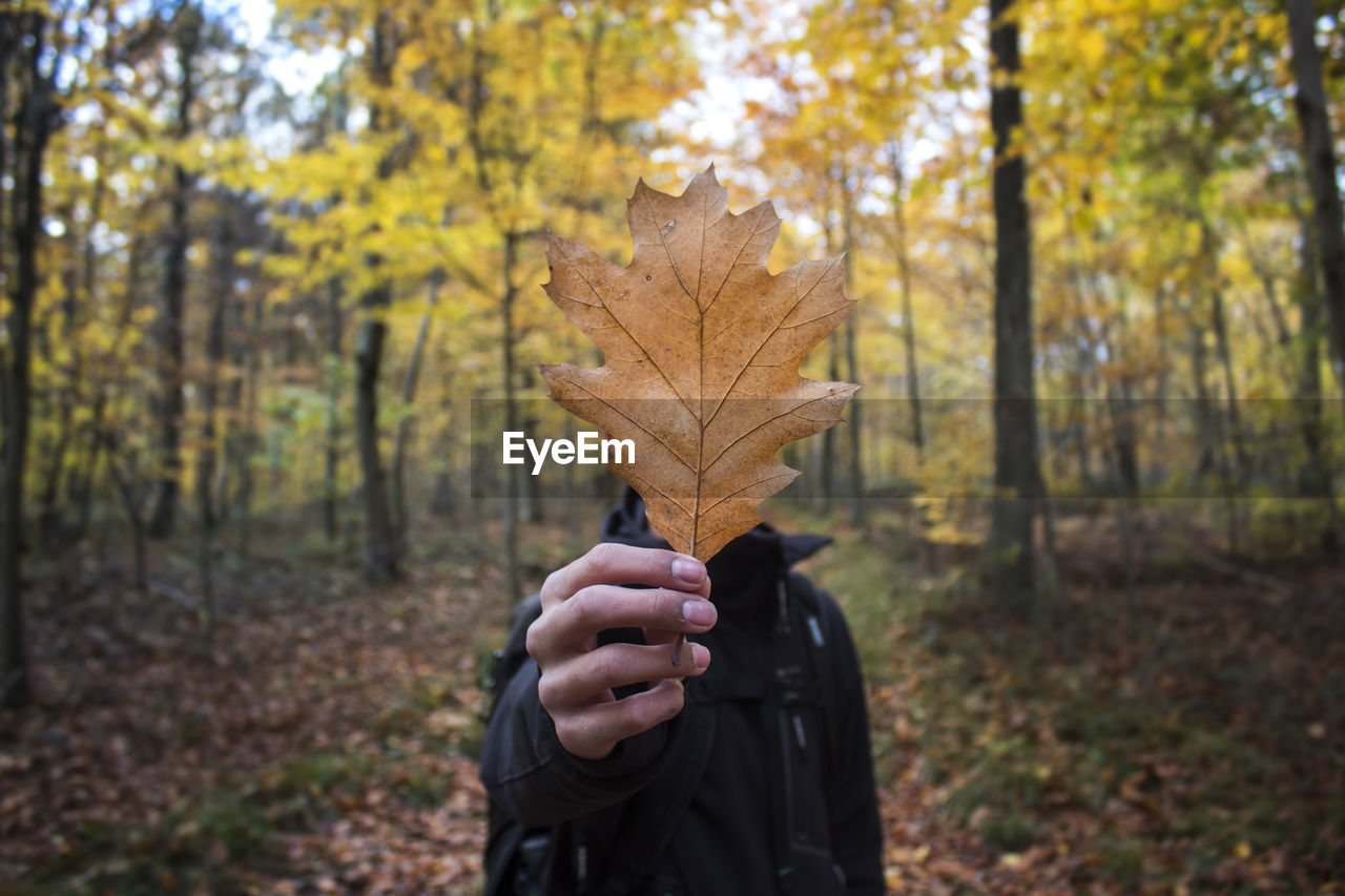 Close-Up Of Leaf Held By Man During Autumn