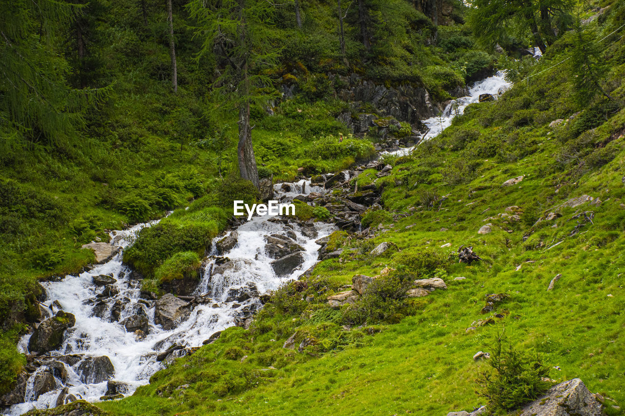 water, plant, beauty in nature, tree, motion, flowing water, forest, green color, scenics - nature, nature, land, no people, waterfall, stream - flowing water, blurred motion, solid, rock, day, rock - object, outdoors, flowing, rainforest