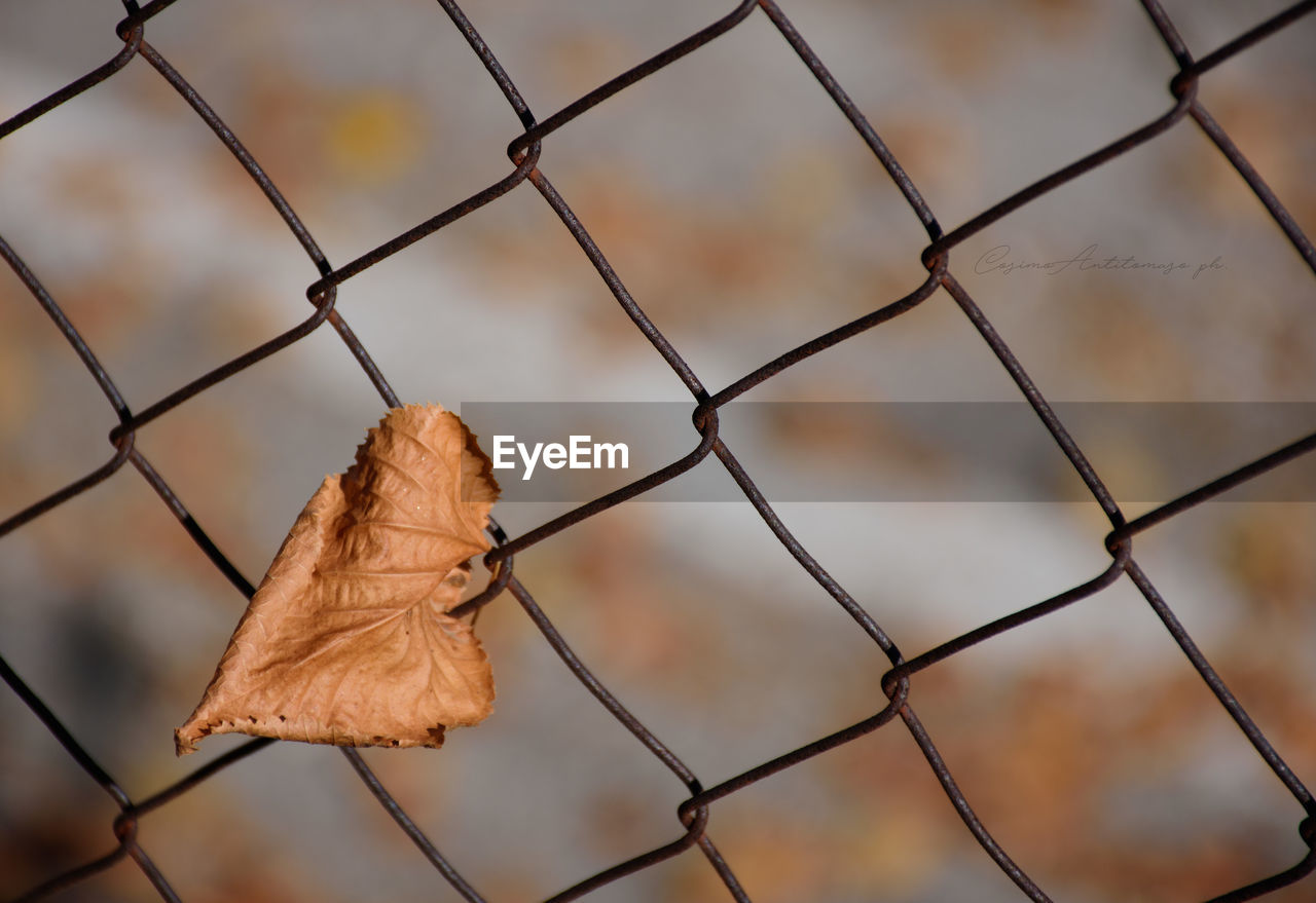 fence, security, leaf, no people, metal, close-up, protection, plant part, chainlink fence, day, focus on foreground, safety, autumn, nature, dry, change, barrier, boundary, outdoors, pattern, leaves, dried