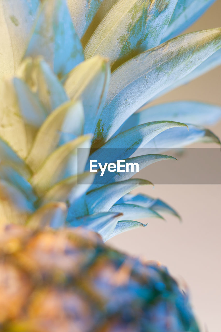 growth, plant, close-up, beauty in nature, no people, selective focus, nature, day, leaf, plant part, green color, outdoors, focus on foreground, freshness, backgrounds, tranquility, pattern, vulnerability, natural pattern, pineapple