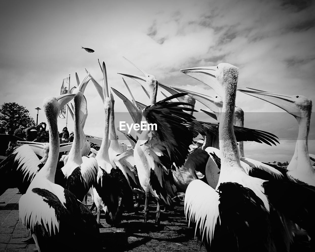 bird, animal themes, sky, low angle view, outdoors, large group of animals, animals in the wild, spread wings, no people, day, animal wildlife, flying, togetherness, pelican, nature