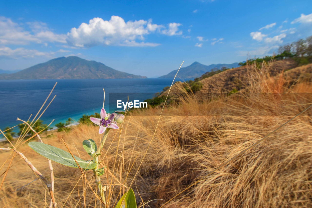 sky, plant, cloud - sky, water, scenics - nature, mountain, land, nature, grass, beauty in nature, tranquil scene, tranquility, day, sea, no people, growth, non-urban scene, environment, beach, outdoors, bay, marram grass