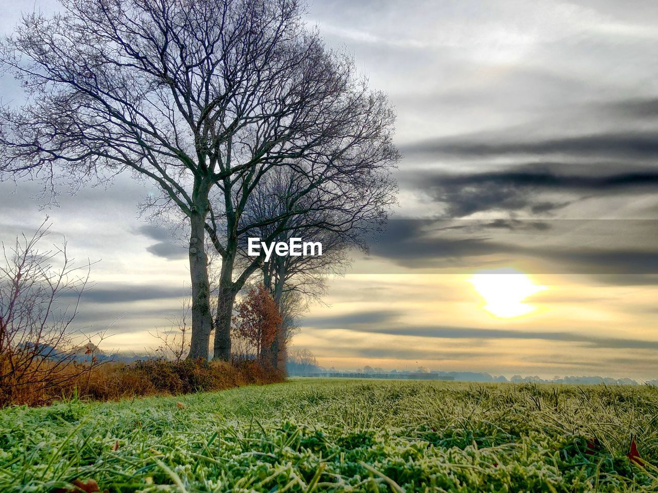 sky, cloud - sky, plant, field, beauty in nature, environment, landscape, tree, tranquil scene, scenics - nature, land, tranquility, bare tree, grass, sunset, nature, no people, non-urban scene, outdoors, isolated