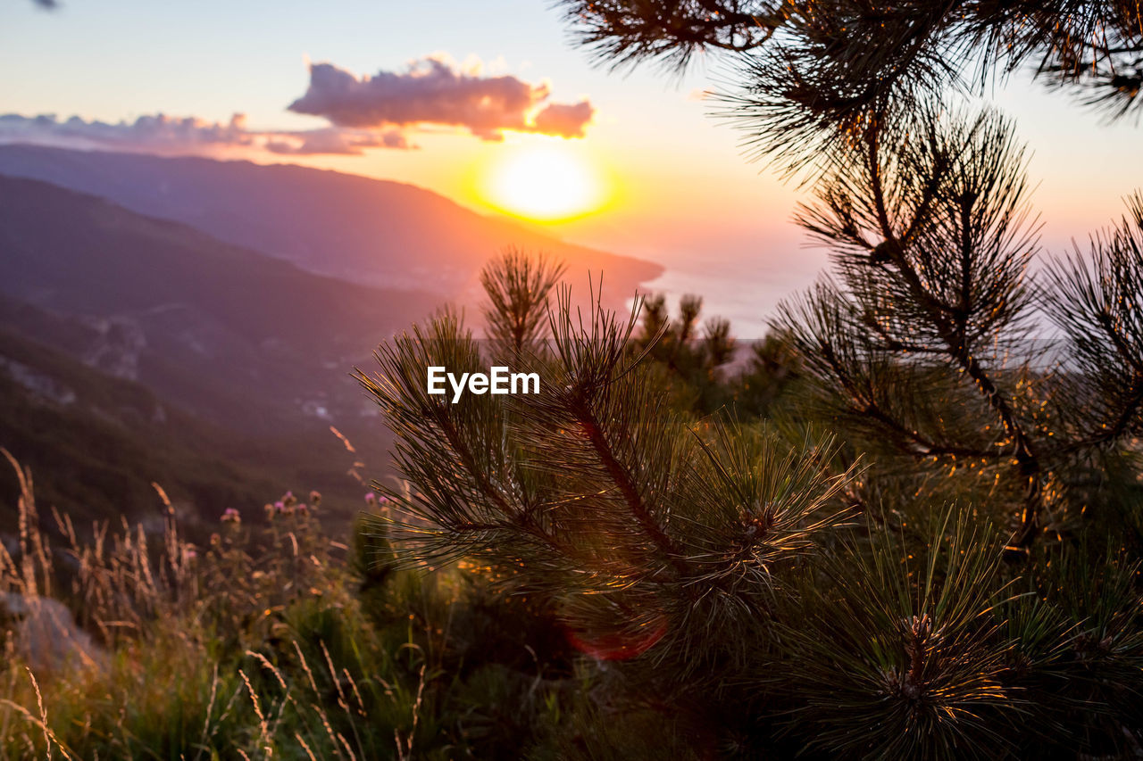 sunset, sky, beauty in nature, plant, tranquility, scenics - nature, tranquil scene, sun, no people, growth, nature, tree, orange color, sunlight, focus on foreground, mountain, outdoors, non-urban scene, idyllic, close-up, coniferous tree