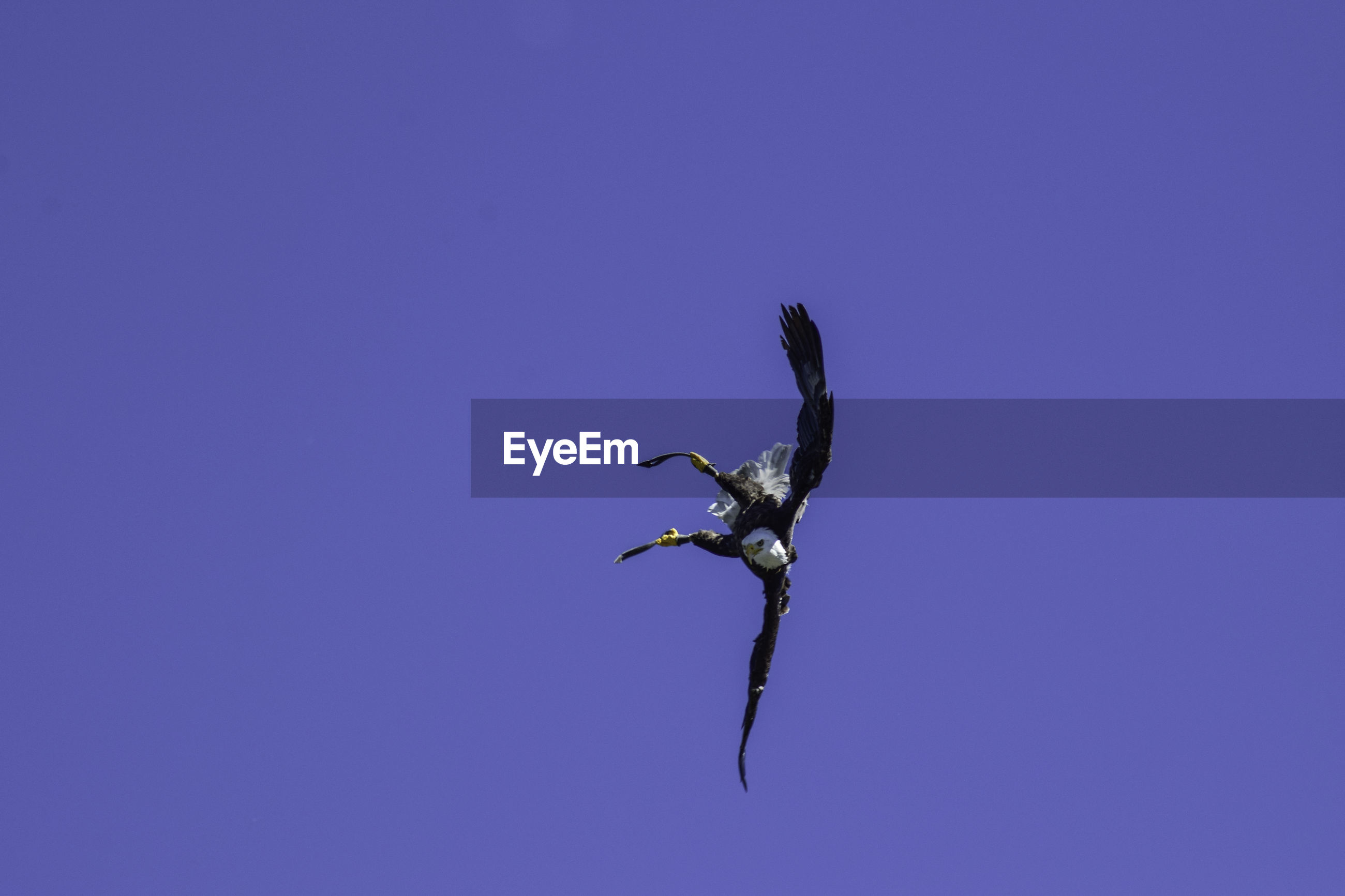 VIEW OF A BIRD FLYING