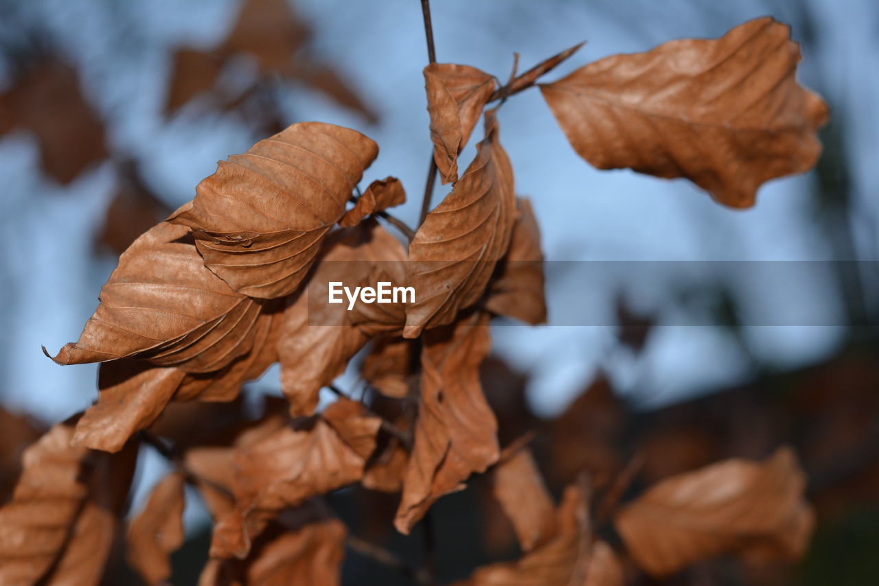 dry, leaf, autumn, nature, brown, fragility, close-up, no people, change, dried plant, outdoors, beauty in nature, day, wilted plant, flower head