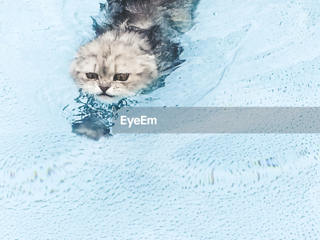 domestic cat, pets, one animal, domestic animals, mammal, feline, animal themes, no people, portrait, looking at camera, relaxation, persian cat, indoors, water, day