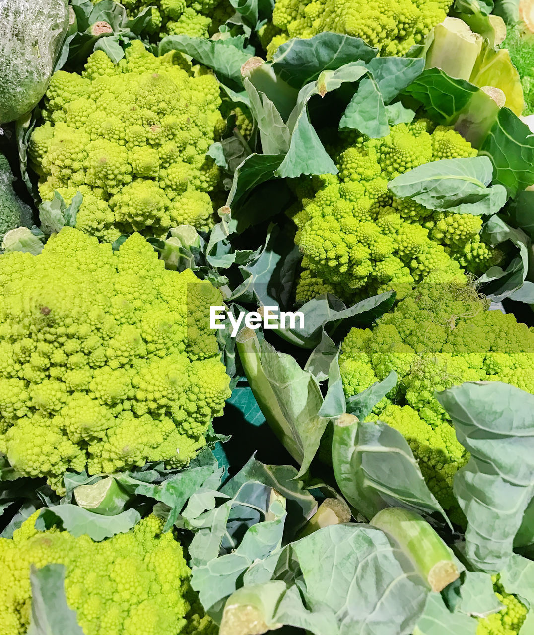 vegetable, green color, healthy eating, food, food and drink, abundance, freshness, raw food, no people, day, growth, full frame, variation, leaf, agriculture, cauliflower, backgrounds, plant, outdoors, nature, beauty in nature, close-up