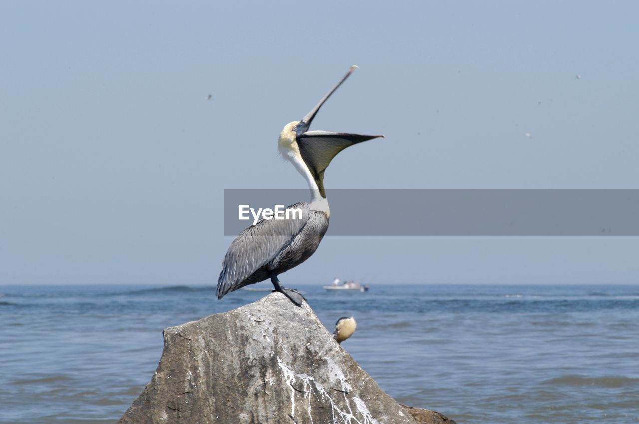 sea, bird, animals in the wild, one animal, animal themes, water, perching, animal wildlife, nature, day, outdoors, no people, horizon over water, beauty in nature, sky, close-up