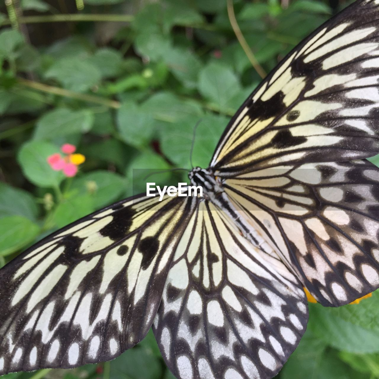 animal, animal themes, animal wildlife, one animal, animals in the wild, animal markings, natural pattern, no people, close-up, nature, day, focus on foreground, animal wing, leaf, striped, animal body part, plant, pattern, plant part, mammal, butterfly - insect, butterfly