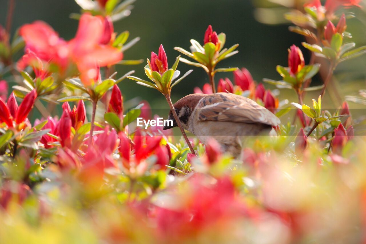 animal themes, plant, animal, animal wildlife, one animal, bird, selective focus, animals in the wild, vertebrate, flowering plant, flower, growth, beauty in nature, nature, no people, day, vulnerability, close-up, fragility, freshness, outdoors, flower head