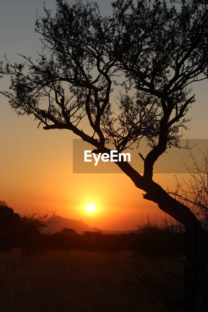 sunset, tree, silhouette, sun, nature, orange color, beauty in nature, tranquility, tranquil scene, scenics, outdoors, landscape, sky, no people, sunlight, field, lone, growth, branch, bare tree, day
