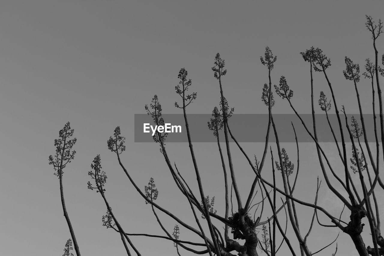plant, sky, low angle view, growth, nature, beauty in nature, no people, day, tranquility, tree, outdoors, clear sky, flower, silhouette, fragility, flowering plant, copy space, vulnerability, close-up, branch, stalk