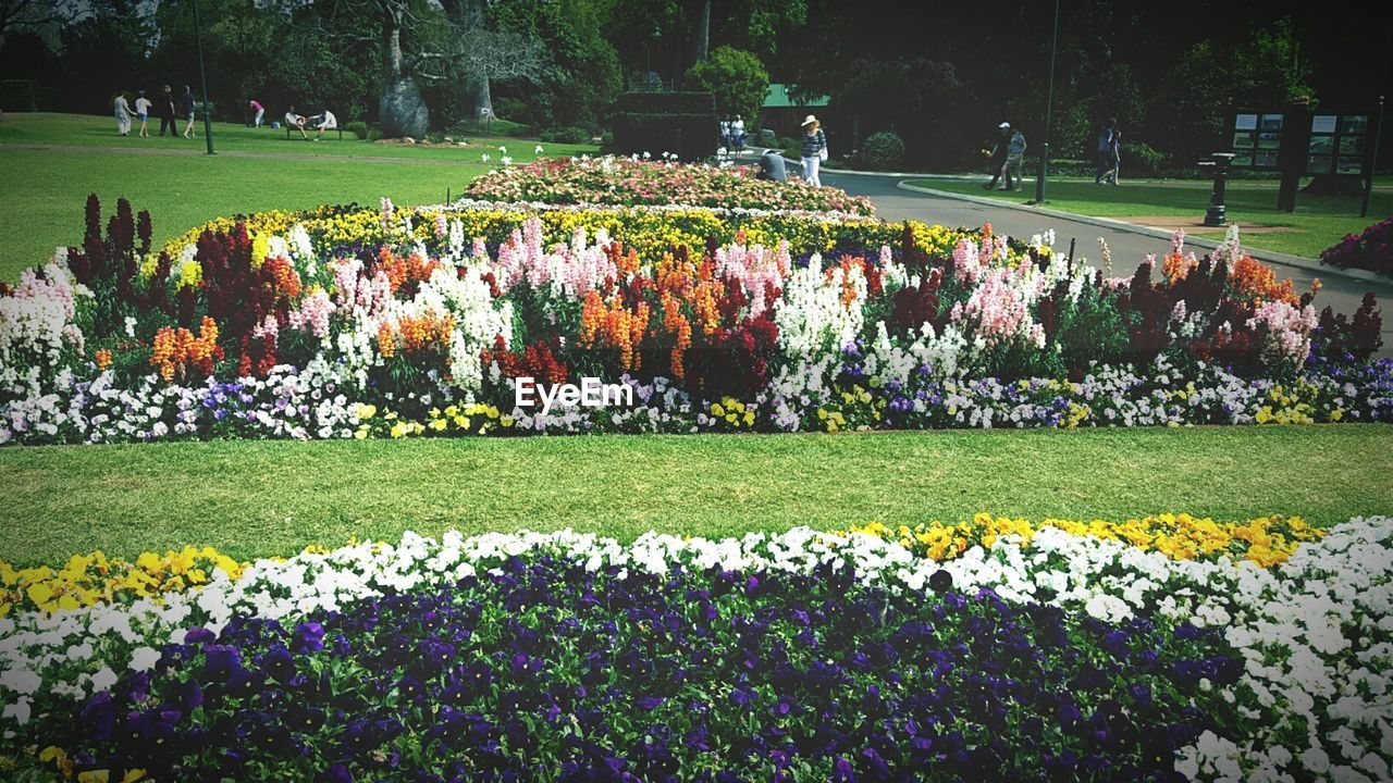 nature, large group of people, flower, beauty in nature, grass, growth, outdoors, day, tree, memorial, park - man made space, plant, field, landscape, real people, fragility, water, freshness, people