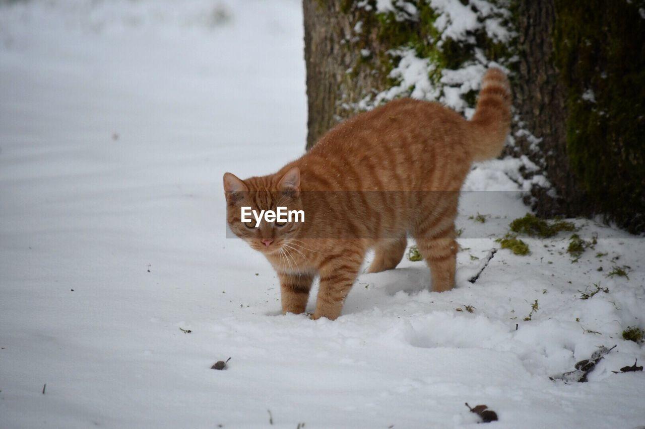 Cat On Snow