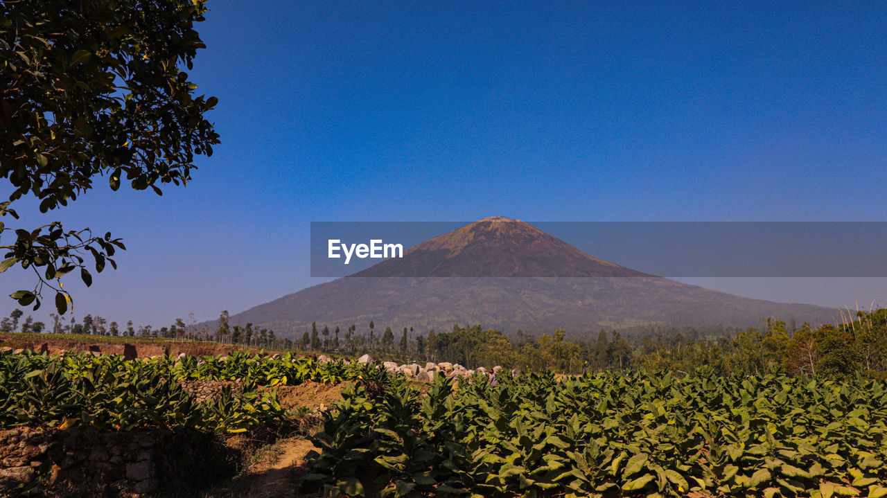 plant, sky, beauty in nature, mountain, scenics - nature, tranquility, clear sky, tranquil scene, nature, land, tree, landscape, growth, blue, copy space, no people, environment, volcano, day, non-urban scene, mountain peak, outdoors