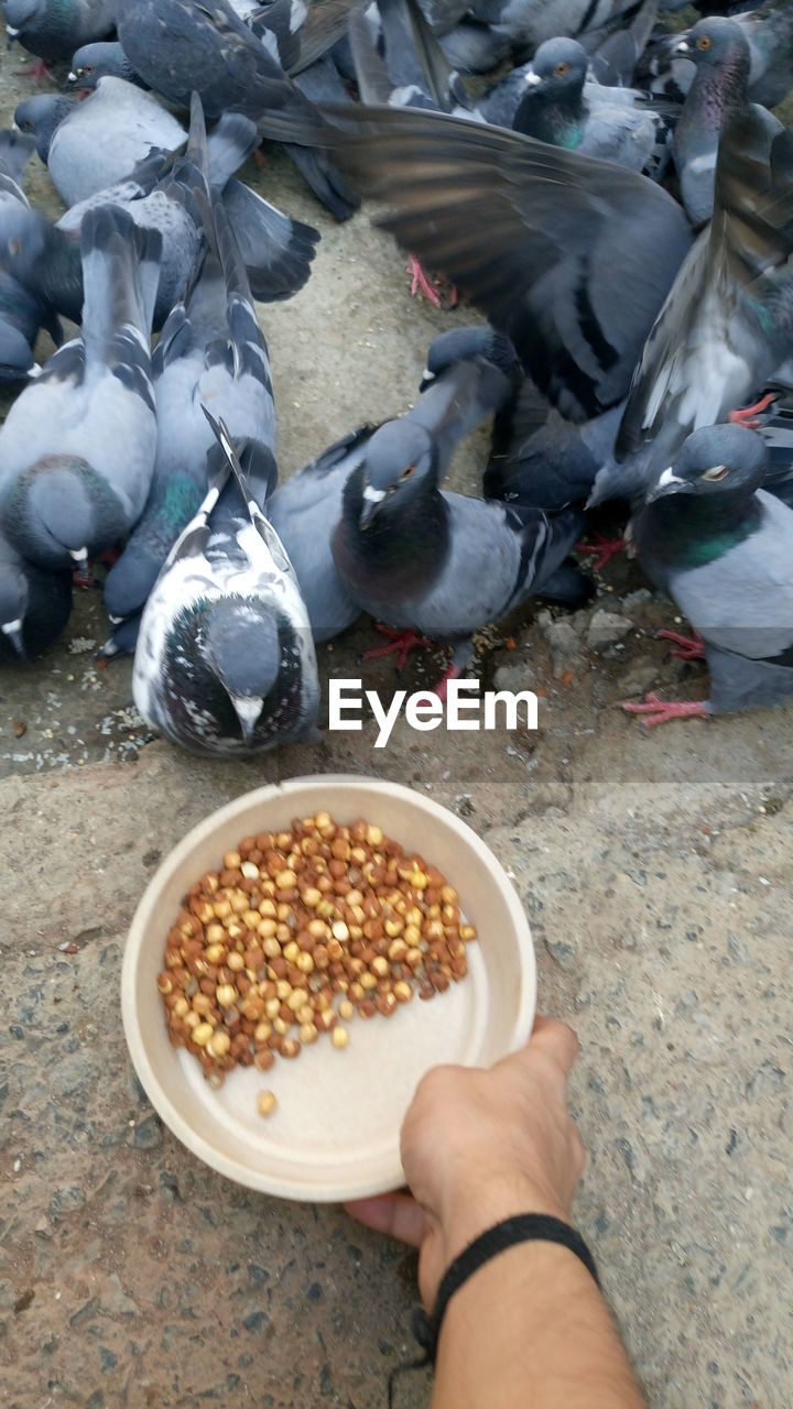 food and drink, food, real people, high angle view, one person, feeding, grain, bird, eating, human body part, lifestyles, day, men, human hand, outdoors, healthy eating, freshness, close-up, people