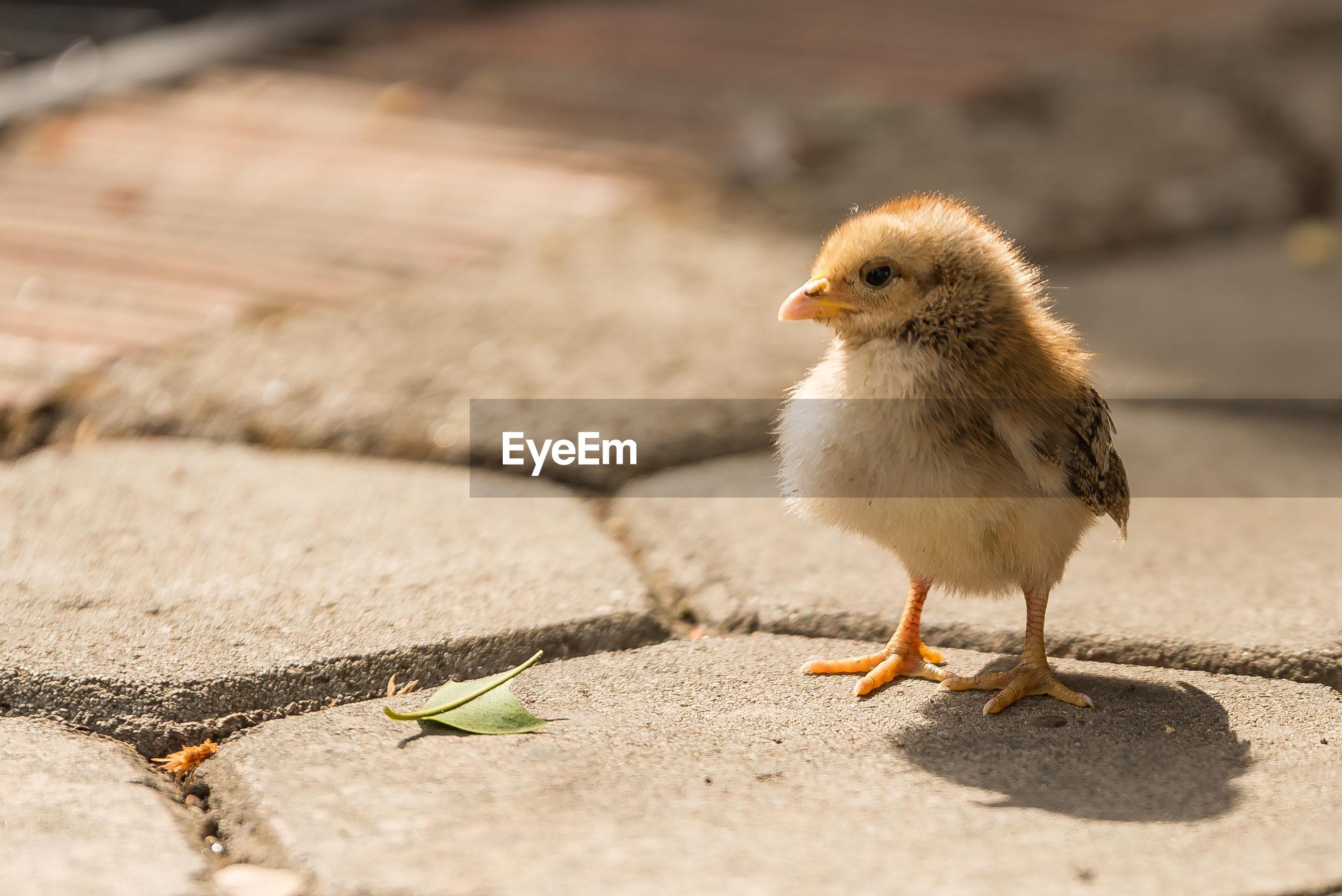Close-up of young bird