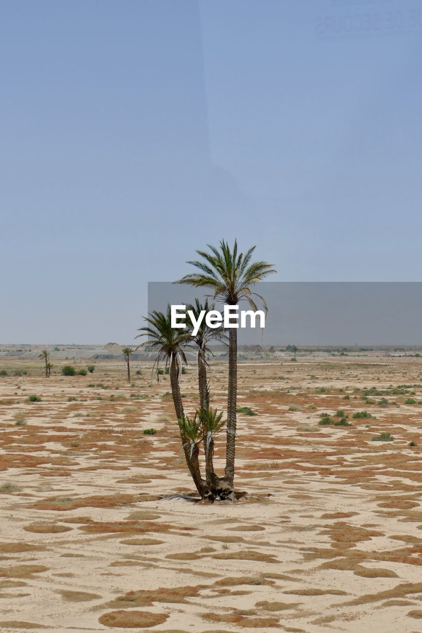 land, sky, plant, nature, palm tree, scenics - nature, growth, no people, clear sky, tranquility, water, beauty in nature, tranquil scene, tropical climate, environment, landscape, sea, tree, horizon, outdoors, arid climate, climate