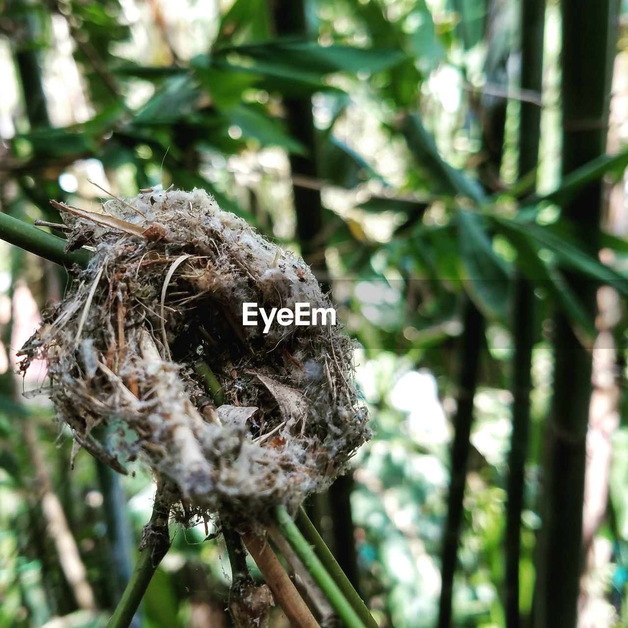 Close-Up Of Bird Nest On Branch