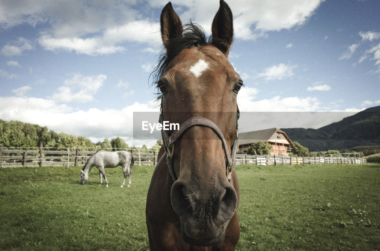 Close-Up Portrait Of Horse Standing On Field Against Sky