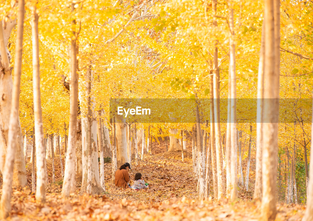 autumn, tree, plant part, leaf, change, forest, nature, yellow, land, plant, day, beauty in nature, one person, orange color, outdoors, adult, walking, full length, woodland