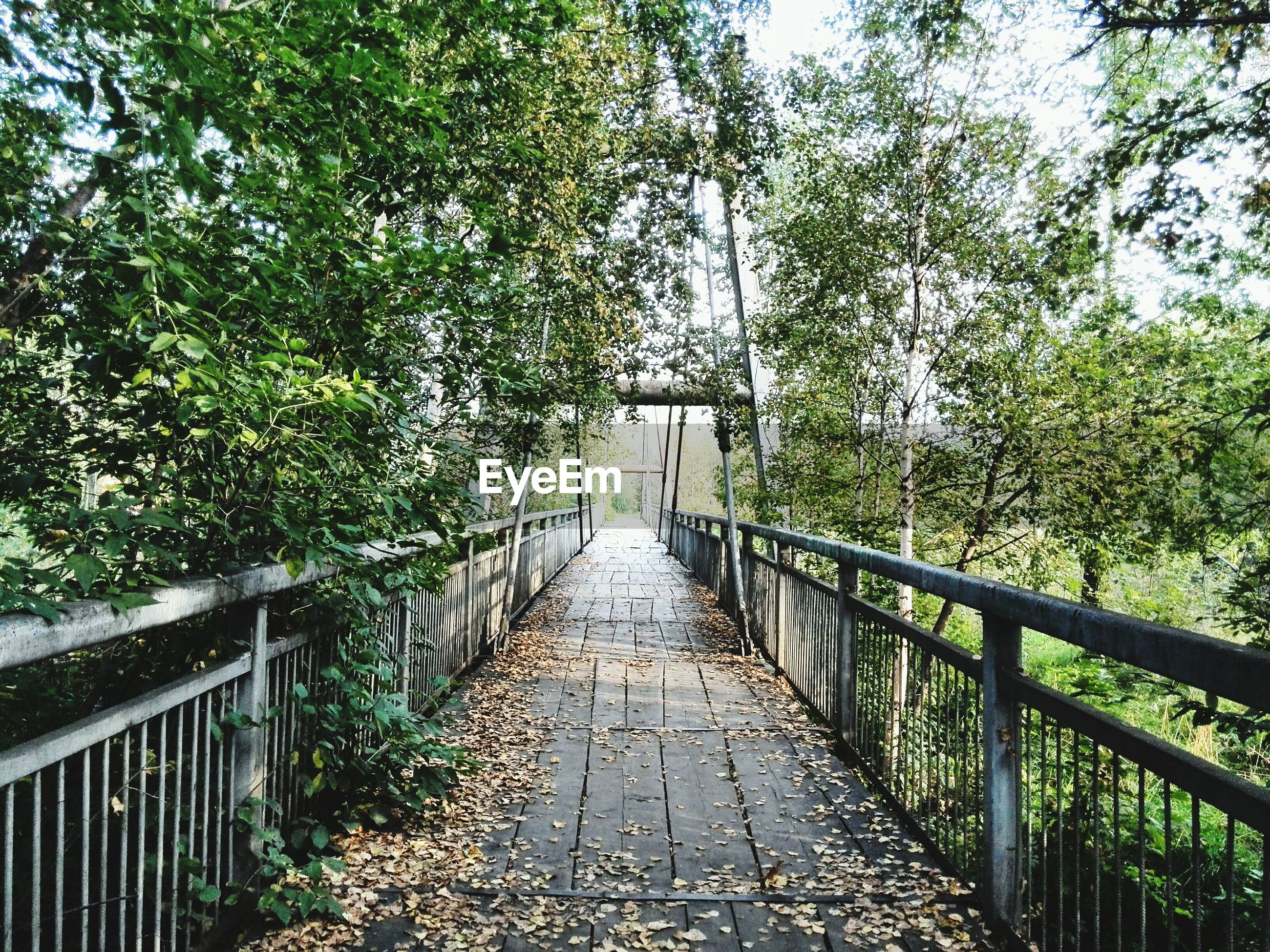 tree, the way forward, railing, growth, diminishing perspective, footbridge, branch, tranquility, vanishing point, nature, footpath, bridge - man made structure, built structure, connection, green color, walkway, day, tranquil scene, beauty in nature, plant