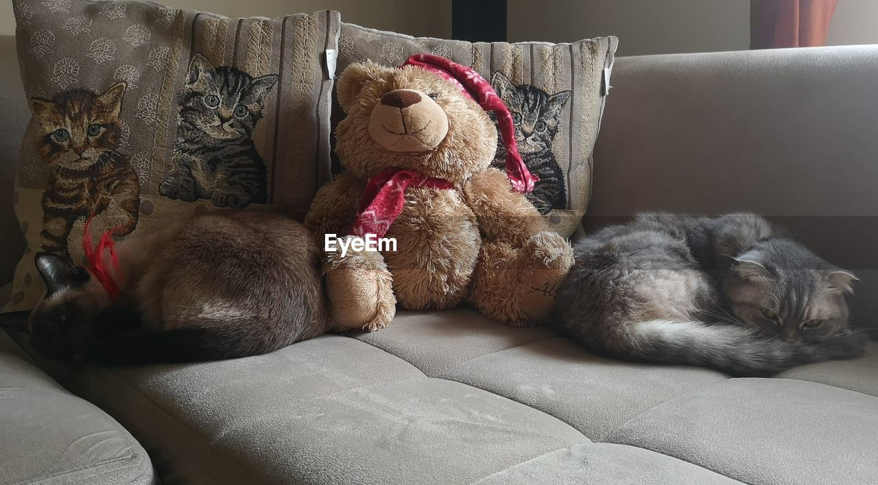 toy, stuffed toy, teddy bear, furniture, indoors, animal representation, no people, home interior, representation, mammal, animal themes, sofa, relaxation, animal, stuffed, pillow, pets, domestic animals, bed, softness