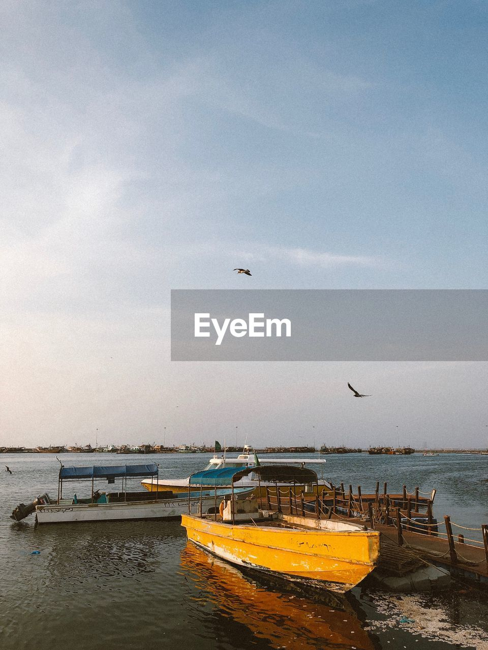 water, sky, transportation, nautical vessel, sea, mode of transportation, flying, bird, animal themes, nature, animal, cloud - sky, vertebrate, animals in the wild, animal wildlife, scenics - nature, beauty in nature, day, moored, no people, outdoors, horizon over water, seagull, fishing boat