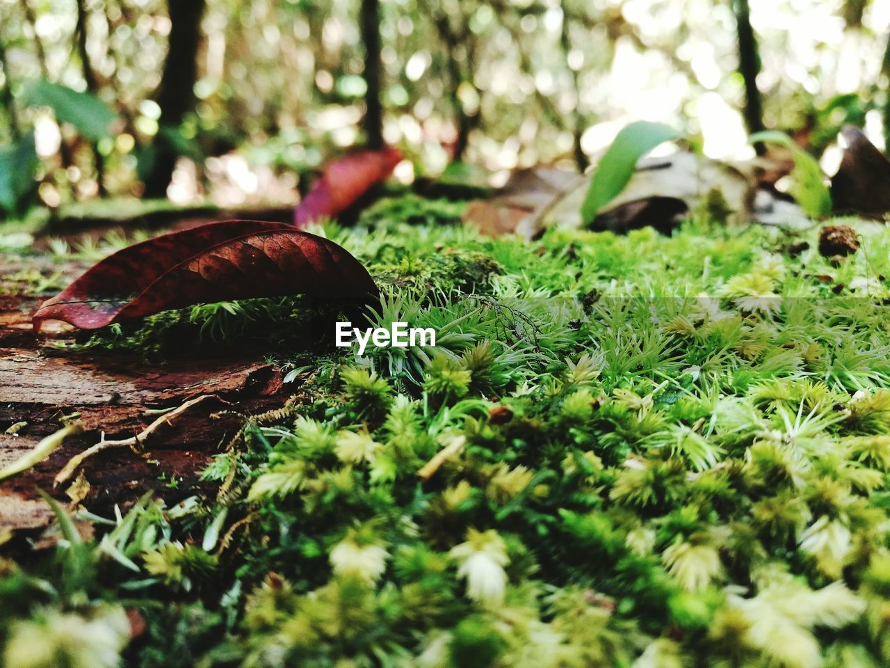 leaf, nature, growth, one animal, outdoors, day, no people, forest, plant, animal themes, grass, close-up, beauty in nature, fragility