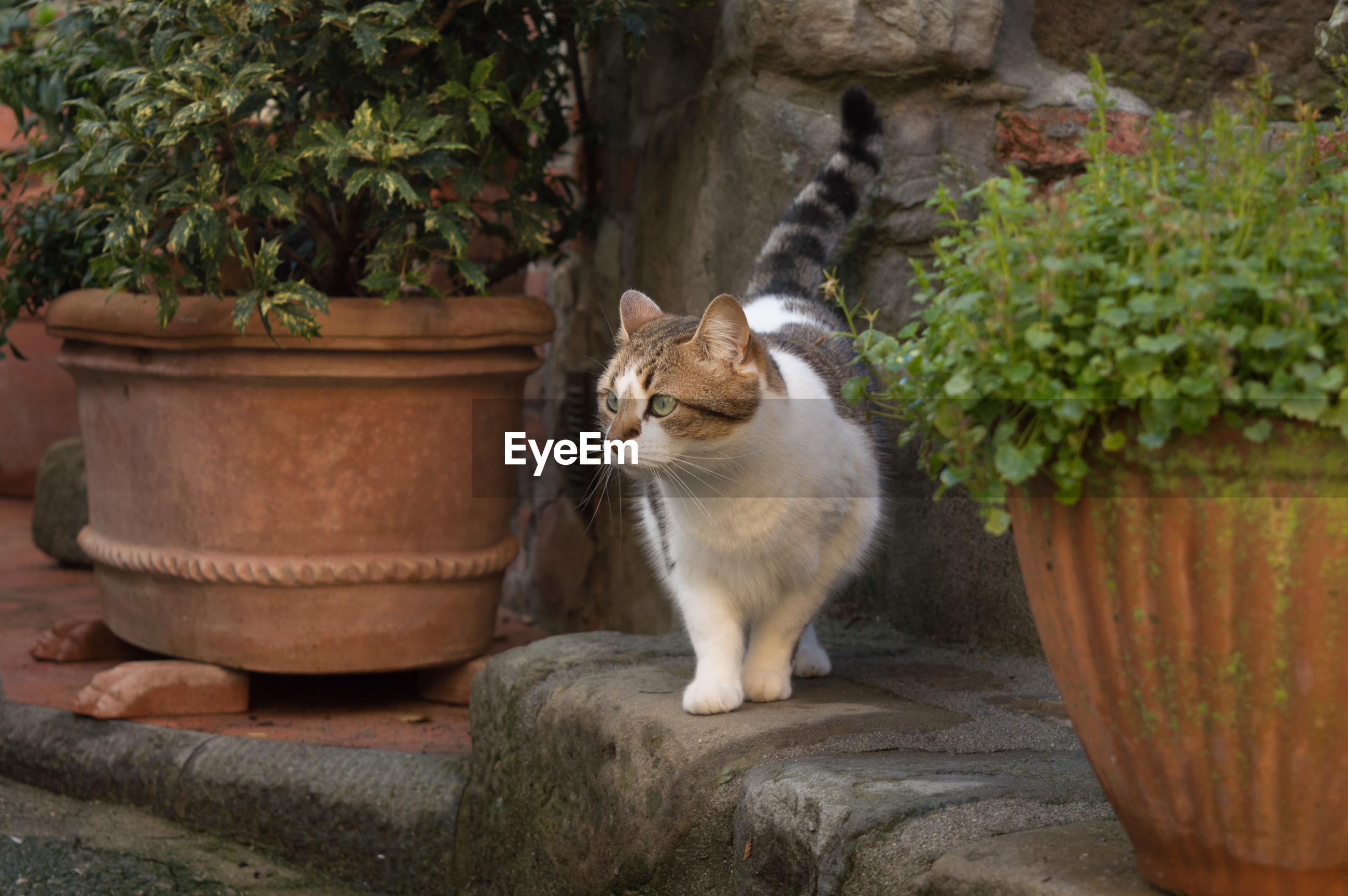 CAT SITTING BY POTTED PLANT IN BACKYARD