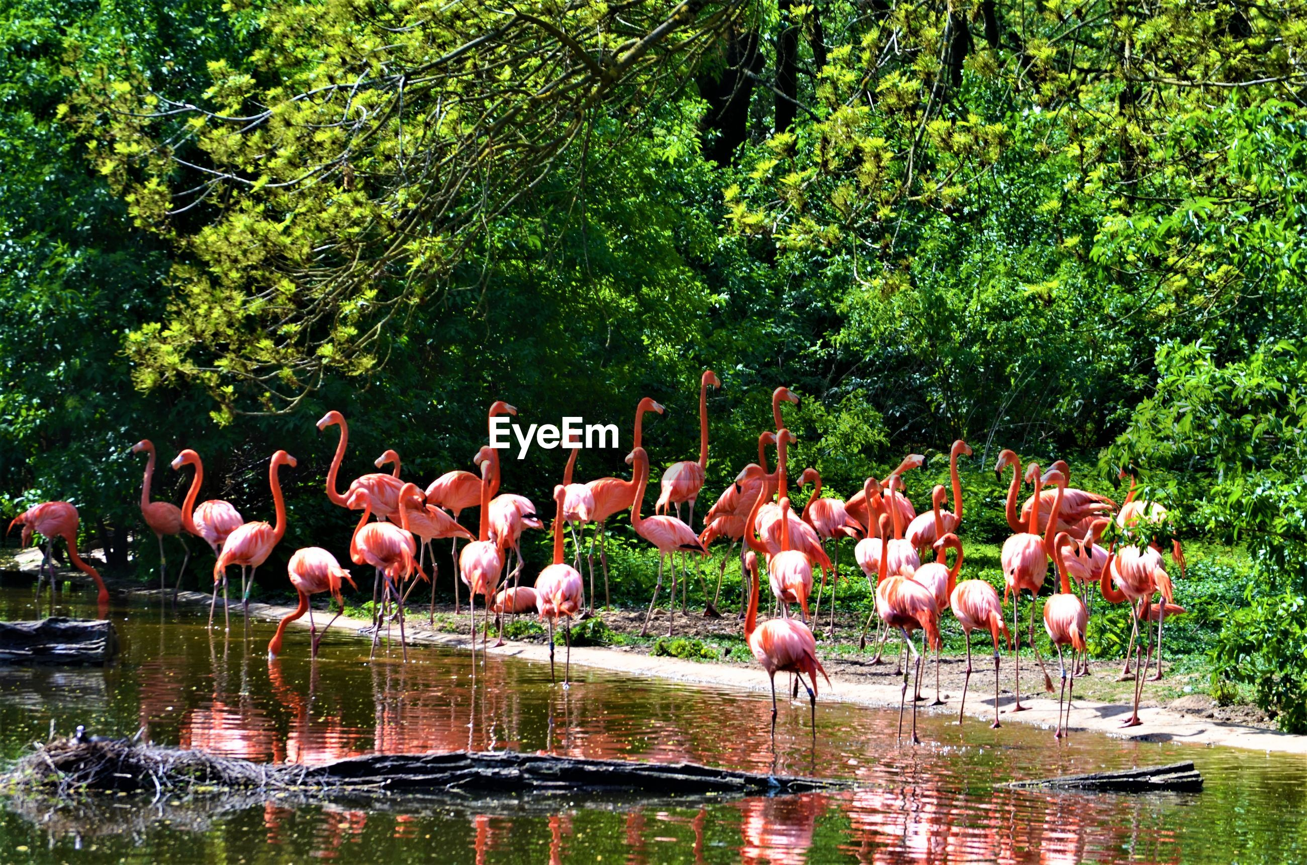 Group of birds in the lake
