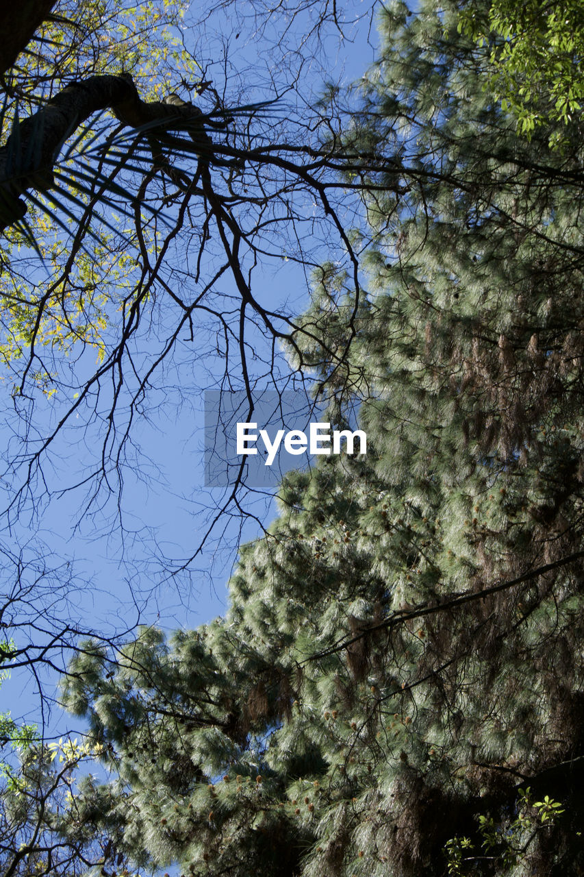 tree, plant, low angle view, growth, nature, no people, sky, branch, day, beauty in nature, tranquility, outdoors, clear sky, sunlight, forest, blue, green color, land, close-up, selective focus, tree canopy