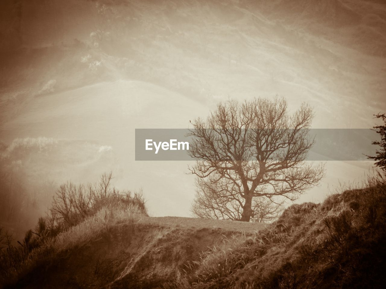 tree, plant, environment, landscape, bare tree, tranquility, sky, nature, tranquil scene, land, beauty in nature, scenics - nature, no people, field, cloud - sky, outdoors, day, mountain, non-urban scene, branch