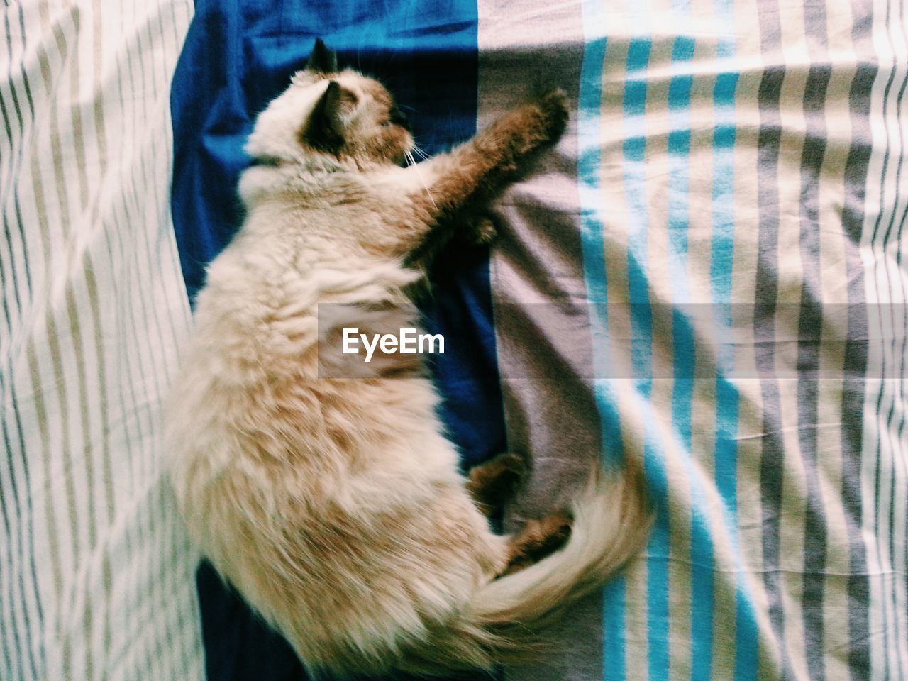 pets, domestic animals, domestic cat, mammal, one animal, animal themes, feline, dog, no people, indoors, day, close-up