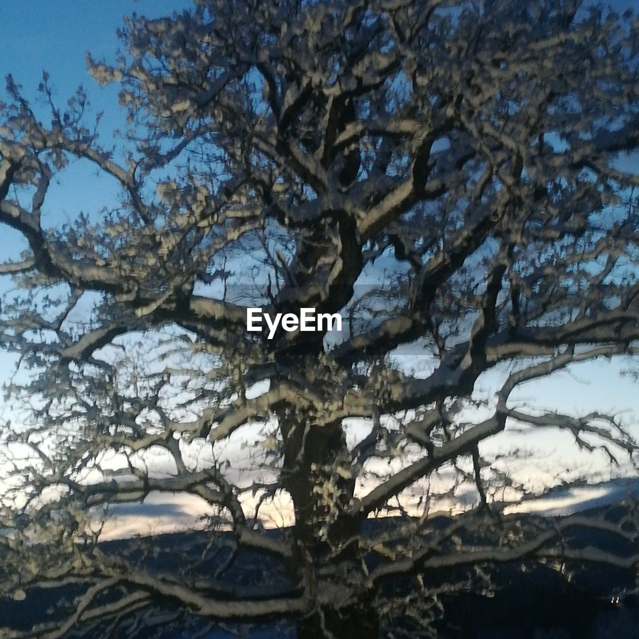 tree, branch, nature, beauty in nature, no people, day, growth, outdoors, low angle view, scenics, sky, close-up, freshness
