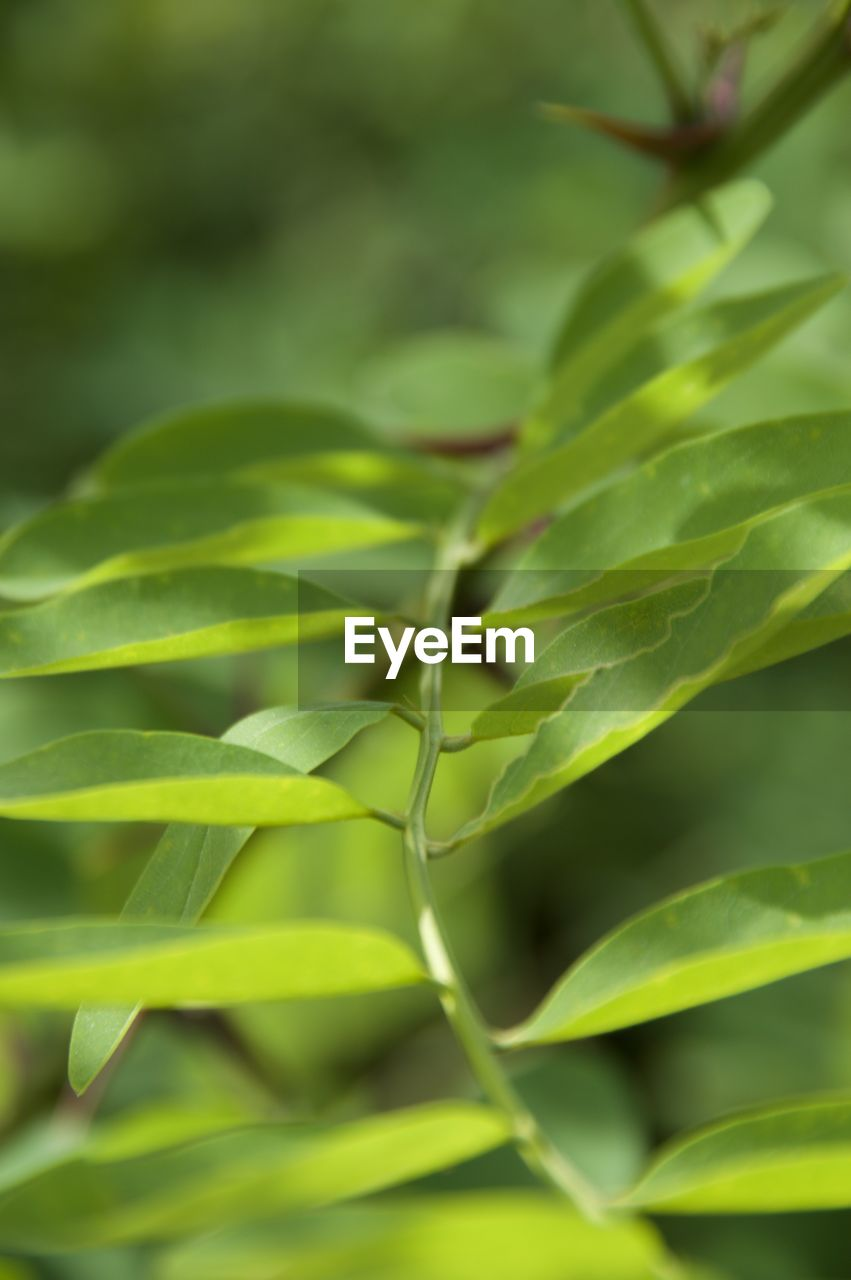 green color, growth, nature, plant, close-up, no people, day, leaf, outdoors, freshness, beauty in nature, fragility, animal themes