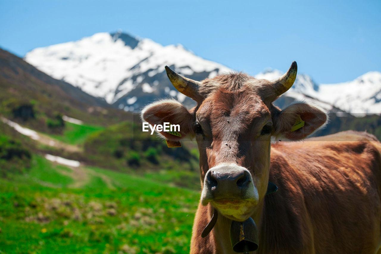 Portrait Of Horse On Landscape